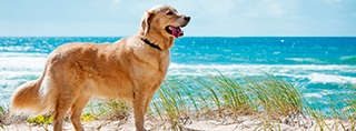 Holidays with dog in Germany